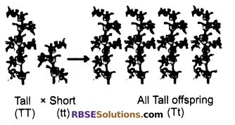RBSE Solutions for Class 10 Science Chapter 3 Genetics image - 1