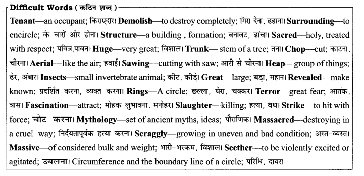 RBSE Solutions for Class 8 English Chapter 4 The Felling of the Banyan Tree 1