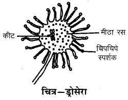 RBSE Solutions for Class 6 Science Chapter 2 पादपों में पोषण 3