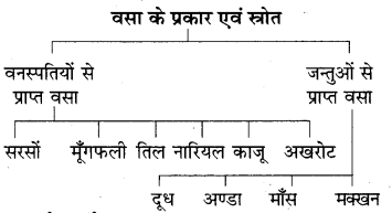 RBSE Solutions for Class 7 Science Chapter 1 भोजन के अवयव 6