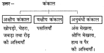 RBSE Solutions for Class 7 Science Chapter 10 कंकाल एवं संधियाँ 11