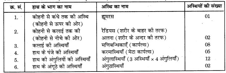 RBSE Solutions for Class 7 Science Chapter 10 कंकाल एवं संधियाँ 13