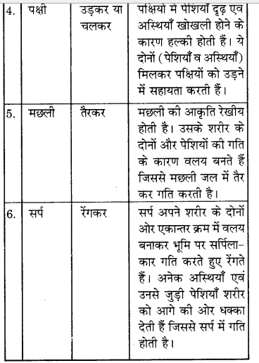 RBSE Solutions for Class 7 Science Chapter 10 कंकाल एवं संधियाँ 16