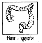 RBSE Solutions for Class 7 Science Chapter 2 प्राणियों में पोषण 5
