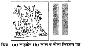 RBSE Solutions for Class 7 Science Chapter 5 अम्ल, क्षारक एवं लवण 10