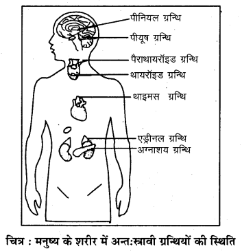 RBSE Solutions for Class 7 Science Chapter 6 अन्त स्रावी ग्रन्थियाँ 2