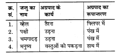 RBSE Solutions for Class 7 Science Chapter 7 जैव विकास 7
