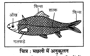 RBSE Solutions for Class 7 Science Chapter 8 जन्तुओं में अनुकूलन 3