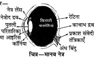 RBSE Solutions for Class 8 Science Chapter 14 प्रकाश का अपवर्तन 9