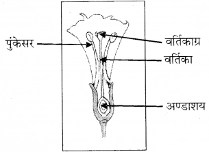 RBSE Solutions for Class 8 Science Chapter 6 पौधों में जनन 10