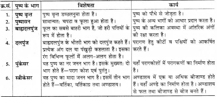 RBSE Solutions for Class 8 Science Chapter 6 पौधों में जनन 11