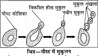 RBSE Solutions for Class 8 Science Chapter 6 पौधों में जनन 2
