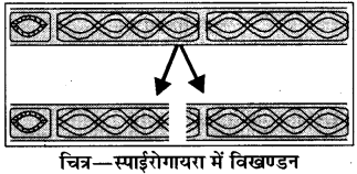 RBSE Solutions for Class 8 Science Chapter 6 पौधों में जनन 3