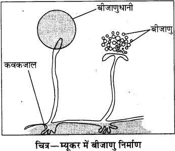 RBSE Solutions for Class 8 Science Chapter 6 पौधों में जनन 4