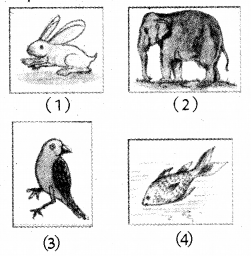 RBSE Solutions for Class 5 Environmental Studies Chapter 8 The Unique World of Insects and Animals 1