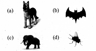 RBSE Solutions for Class 5 Environmental Studies Chapter 8 The Unique World of Insects and Animals 2