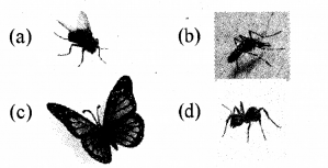 RBSE Solutions for Class 5 Environmental Studies Chapter 8 The Unique World of Insects and Animals 3