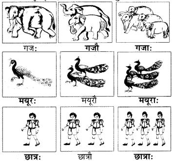 RBSE Solutions for Class 6 Sanskrit Chapter 2 अकारान्त-पुँल्लिङ्गशब्दप्रयोगः 3