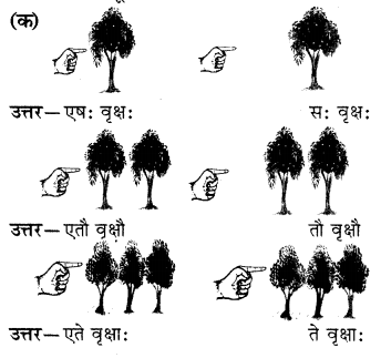 RBSE Solutions for Class 6 Sanskrit Chapter 5 सर्वनाम-शब्दप्रयोगः (एतत्-तत्-किम्) 3
