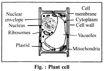 RBSE Solutions for Class 6 Science Chapter 7 Cell 5