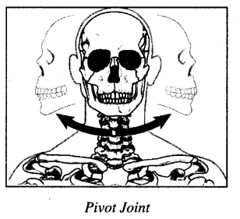 RBSE Solutions for Class 7 Science Chapter 10 Skeleton and Joints 8