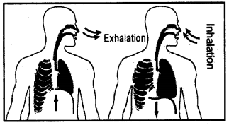 RBSE Solutions for Class 7 Science Chapter 9 Respiration and Excretion in Animals 4