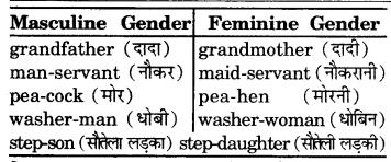 RBSE Class 7 English Vocabulary Gender 7