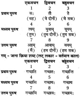 RBSE Class 6 Sanskrit व्याकरण अनुवाद-प्रकरणम् 3
