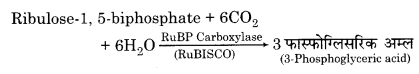 RBSE Solutions for Class 12 Biology Chapter 10 3Q.2.2