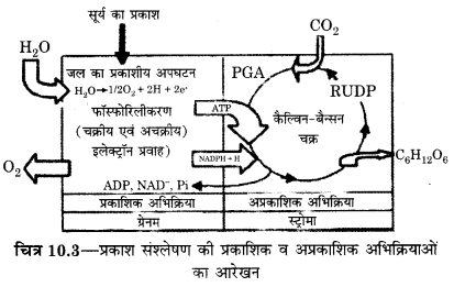 RBSE Solutions for Class 12 Biology Chapter 10 Q.1