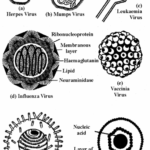 RBSE Solutions for Class 11 Biology Chapter 3