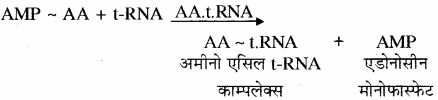 RBSE Solutions for Class 11 Biology Chapter 12 आण्विक जीवविज्ञान img-20