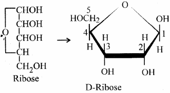 RBSE Solutions for Class 11 Biology Chapter 12 Molecular Biology img-15