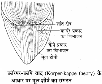 RBSE Solutions for Class 11Chapter 13 पादप ऊतक: आंतरिक आकारिकी img-5