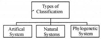 RBSE Solutions for Class 11 Biology Chapter 23 Plant Taxonomy img-2