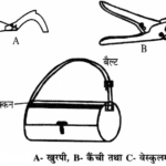 RBSE Solutions for Class 11 Biology Chapter 24 भारतीय वानस्पतिक उद्यान एवं पादप संग्रहालय