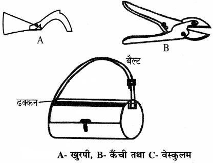 RBSE Solutions for Class 11 Biology Chapter 24 भारतीय वानस्पतिक उद्यान एवं पादप संग्रहालय img-4