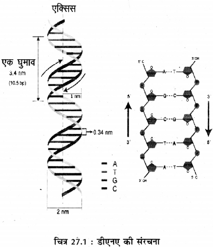 RBSE Solutions for Class 11 Biology Chapter 27 जीवन का अभिप्राय img-2