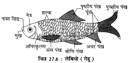 RBSE Solutions for Class 11 Biology Chapter 27 जीवन का अभिप्राय img-6