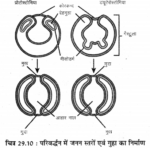 RBSE Solutions for Class 11 Biology Chapter 29 जन्तुओं का वर्गीकरण