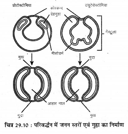 RBSE Solutions for Class 11 Biology Chapter 29 जन्तुओं का वर्गीकरण img-2