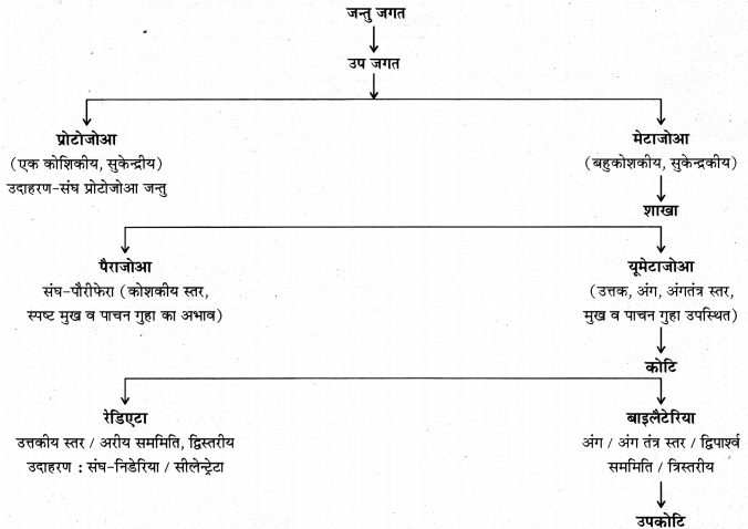 RBSE Solutions for Class 11 Biology Chapter 29 जन्तुओं का वर्गीकरण img-4