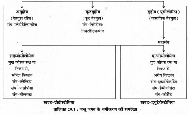 RBSE Solutions for Class 11 Biology Chapter 29 जन्तुओं का वर्गीकरण img-5