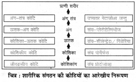 RBSE Solutions for Class 11 Biology Chapter 32 शारीरिक संगठन की कोटियाँ img-1