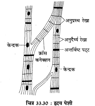 RBSE Solutions for Class 11 Biology Chapter 33 जन्तु ऊतक img-13