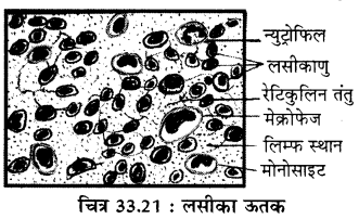 RBSE Solutions for Class 11 Biology Chapter 33 जन्तु ऊतक img-8