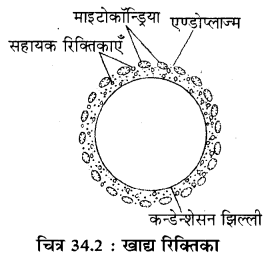 RBSE Solutions for Class 11 Biology Chapter 34 अमीबा img-2