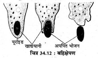 RBSE Solutions for Class 11 Biology Chapter 34 अमीबा img-7