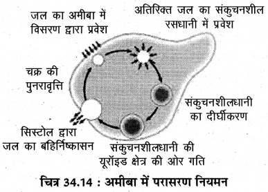 RBSE Solutions for Class 11 Biology Chapter 34 अमीबा img-14