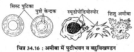 RBSE Solutions for Class 11 Biology Chapter 34 अमीबा img-16